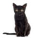 My Black Psychic Cat And Animal Reiki